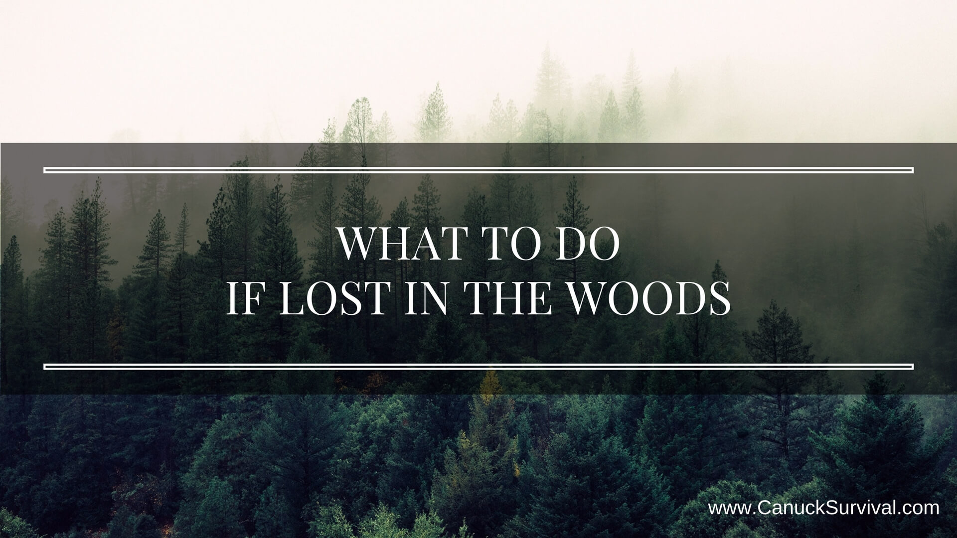 What To Do if Lost in The Woods